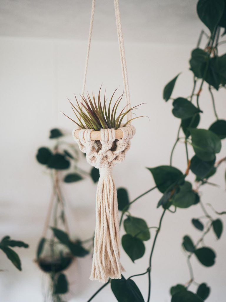 Makramee Tillandsien Halter selber machen, Luftpflanzen Hänger, Anfänger Projekt, Pflanzen